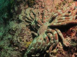 octopus starfish
